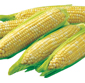 Picture of Fresh Sweet Corn